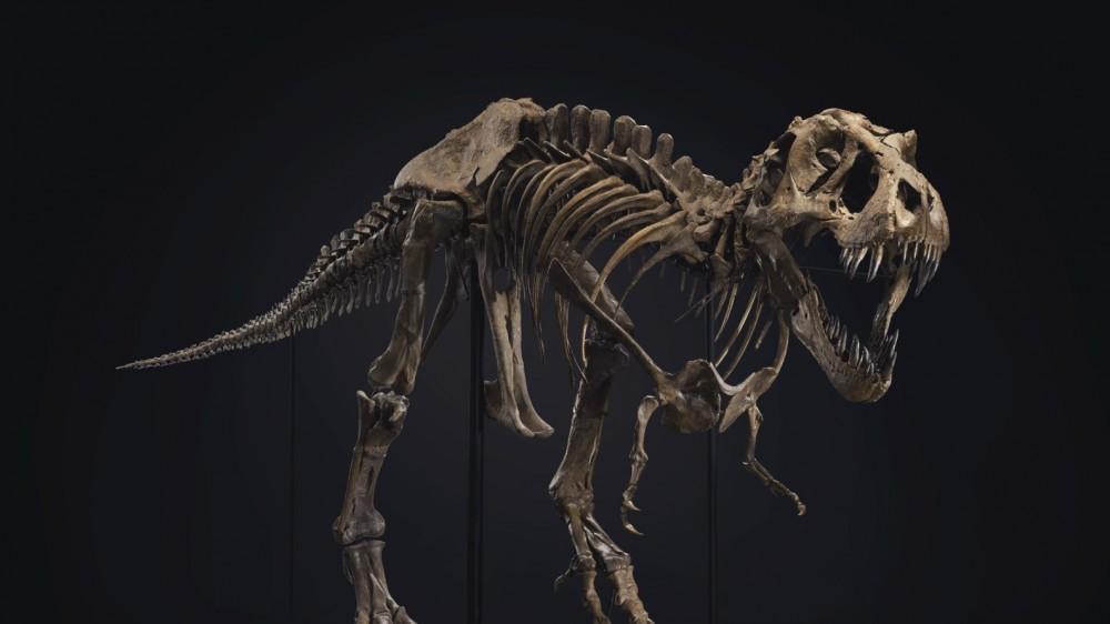 FOTO // Scheletul unui T-Rex, estimat la între 6 şi 8 milioane de dolari, scos la licitaţie la New York